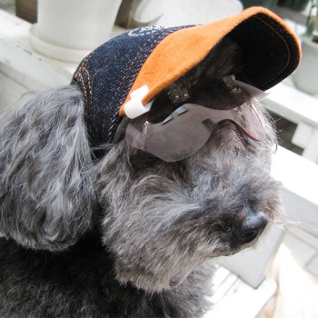 ぼたんちゃん  トイプードル / ♀ 体重:2.8kg  【charie】DENIM(orange)+Swarovski タレ耳25サイズ着用  なでなでされるのが大好きなぼたんちゃん。ワングラスもよくお似合いです☆  I.M.GALLERY blog charieモデル犬紹介〜トイプードルのぼたん〜