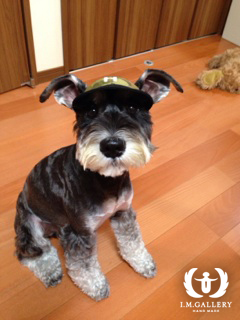 ハルくん  ミニチュアシュナウザー / ♂ 体重:7.5kg  CAMO CAP (black) タチ耳4サイズ着用  とってもやんちゃで元気いっぱいのハルくん。 ソルト&ペッパーのきれいな毛色にお帽子がとてもよくお似合いです♪  I.M.GALLERY blog  ★ミニチュアシュナウザーのハルくん★