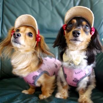 リンちゃん(左)とメイちゃん(右)  カニンヘンダックス / ♀ / ♀ 体重:2.5kg / 2.9kg  CARIB CAP (red) タレ耳1サイズ着用 / タレ耳2サイズ着用  とっても小柄でとってもキュートなメイちゃんとリンちゃん♪ かわいいおふたり、麦わら帽子もとてもよくお似合いです☆  I.M.GALLERY blog  ★カニンヘンダックスのメイちゃんとリンちゃん★