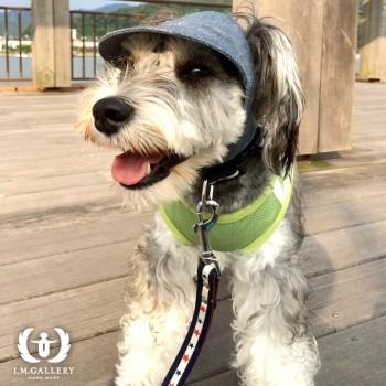 オーディーくん  ミニチュアシュナウザー / ♂ 体重:8.3kg  COLLEGE CAP (white×navy) タチ耳5サイズ着用  人も犬も大好きで、みんなと遊ぶのが大好きなオーディーくん。 これからも帽子を被ってたくさんたくさん遊んでくださいね♪  I.M.GALLERY blog  ★ミニチュアシュナウザーのオーディーくん★