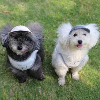 KIDくん(左)とユキちゃん(右)  トイプードル / ♂ / ♀ 体重:2.6kg / 1.7kg  FRENCH CAP (natural)タレ耳2サイズ /  (indigo)0サイズ着用  カメラ目線でかわいい舌をペロっ。 とってもかわいいKIDくんとユキちゃん♪ お揃いのお洋服に色違いの毛色と色違いのお帽子、センスばっちりです☆  I.M.GALLERY blog  ★トイプードルのKIDくんとユキちゃん★
